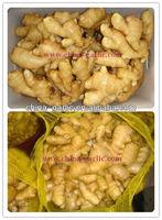 Fresh Ginger/Fresh Ginger Specification In Different Packaging