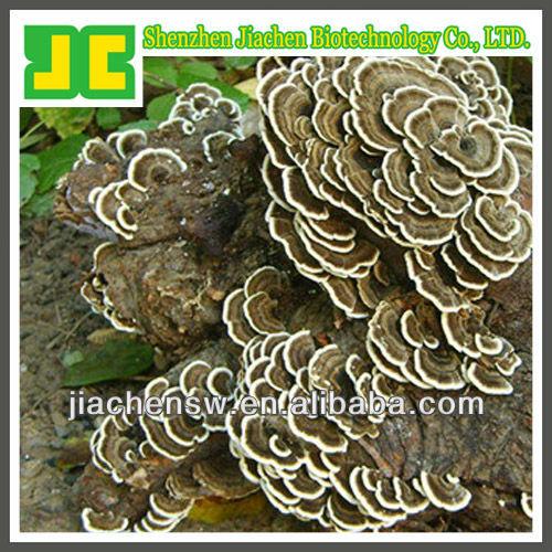 Sell 100% natural Coriolus versicolor P.E. with Coriolus polysaccharides