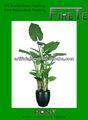 Artificial taro/dieffenbachia/pequeños árboles utilizados para el hogar o decoración de la oficina