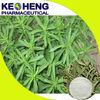 best quality stevia extract/stevioside stevia sweetener/stevia rebaudiana p.e