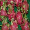 Pitaya extract with Lower cholesterol