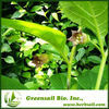 Natural Herb Henbane Extract Power