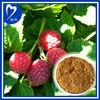 100% Pure Natural Raspberry Powder