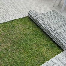 Floor cover citronella grass seeds plastic