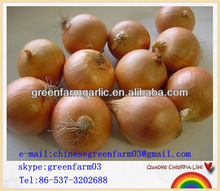high quality spring fresh onion for sale 2013
