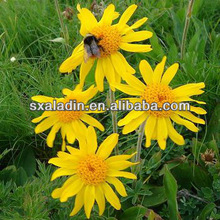 high quality arnica flower extract