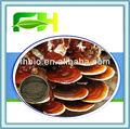 100% naturel ganoderma lucidum spores en poudre