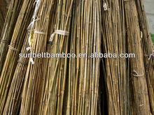 Raw tokin bambo cane