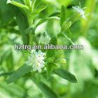 Stevia Sweetener : Stevia extract Stevioside Rebaudioside A (RA)