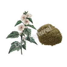 Marshmallow Leaf Herb Plant(In stock)!