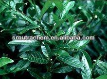 Organic Pygeum Africanum Extract