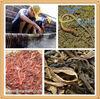 Earthworm Powder Extract Lumbrokinase In Bulk Supply