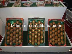 Fresh Fruit Export Packaging