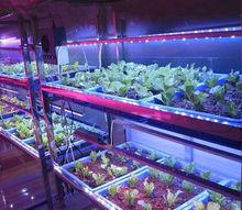 tomato led grow light ,proffesional bar strip grow ligh for tomato growin