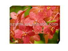 Modern orchid canvas art paintings