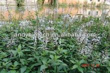 Organic Java Tea Extract 4:1