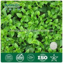 Bulk pure stevia extract/100% natural sweetener/ pure stevia powder