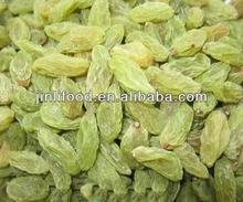 green raisin natural,sun-dried raisin