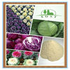 Herbal Plant Extract Powder Organic Kale