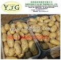 la chine shandong hollande pomme de terre 2013 prix