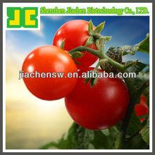 100% Natural Tomato organic lycopene