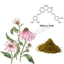 China Manufacture Medicine Echinacea Extract Polyphenols 4%