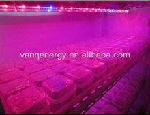 2013 Factory best price flexible led grow strip 660nm 450nm waterproof led plant light,full spectrum led grow lights