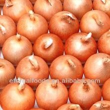 fresh yellow onion from china onion factory
