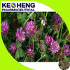 Supply trifolium pratense extract powder red clover extract trifolium pratense extract
