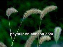 Horsetail P.E. 7% Organic Silicon/2%~7% Silica