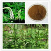 2013 Hot Sale Hight Quality Black Cohosh Root Extract with triterpenes glycoside 10%5%HPLC from ISO,BV,Koser Certificate Factory
