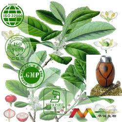 Yerba Mate Extract 10-1,20-1,25% polyphenol