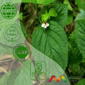 المر استخراج figwort picfeltarraeninib،ia 5% 98% 10:1 20:1
