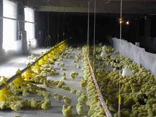 BC Series Broiler Chicken Feeding Equipment