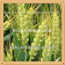 ammonium nitrate chemical fertilizer