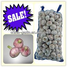 Garlic/Garlic Price/Garlic China Supplier/Manufacturer/Exporter