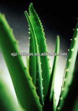 100:1 Aloe barbadensis Miller Light yellow power