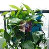 Mini plant bag /plant bags /gargen bag /Mini vertical planting bag