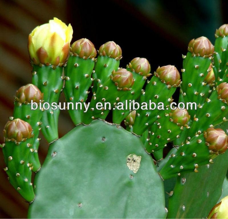 100% Natural Cactus Extract with malic acid,succinic acid,triterpene