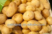 sweet potato exporter from China