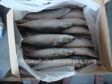 best 400-600g mackerel /frozen seafood exporter