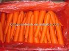 fresh carrot 2013 new arrival!