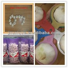 jinxiang new crop export UK chinese fresh garlic crop 2012