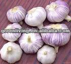 2014 fresh normal white garlic 5 cm