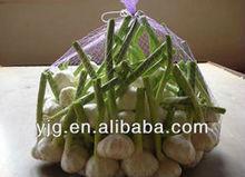 fresh normal white garlic for 2013 new season