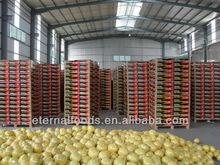 Export new fresh honey pomelo from China