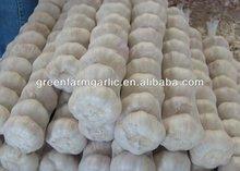 new crop pure white garlic seller