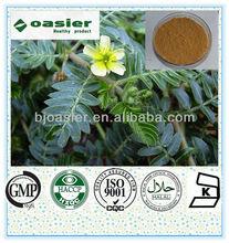 Natural Manufacturer Supply tribulus terrestris extract(total saponins 80%)