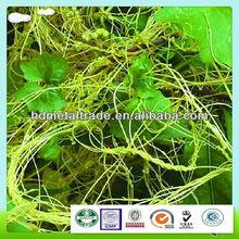 cuscutae seed extract