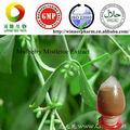 Gelso estratto di vischio/taxillus chinensis 10:1
